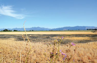 Marlborough is one of the driest places in New Zealand. Photo: File.