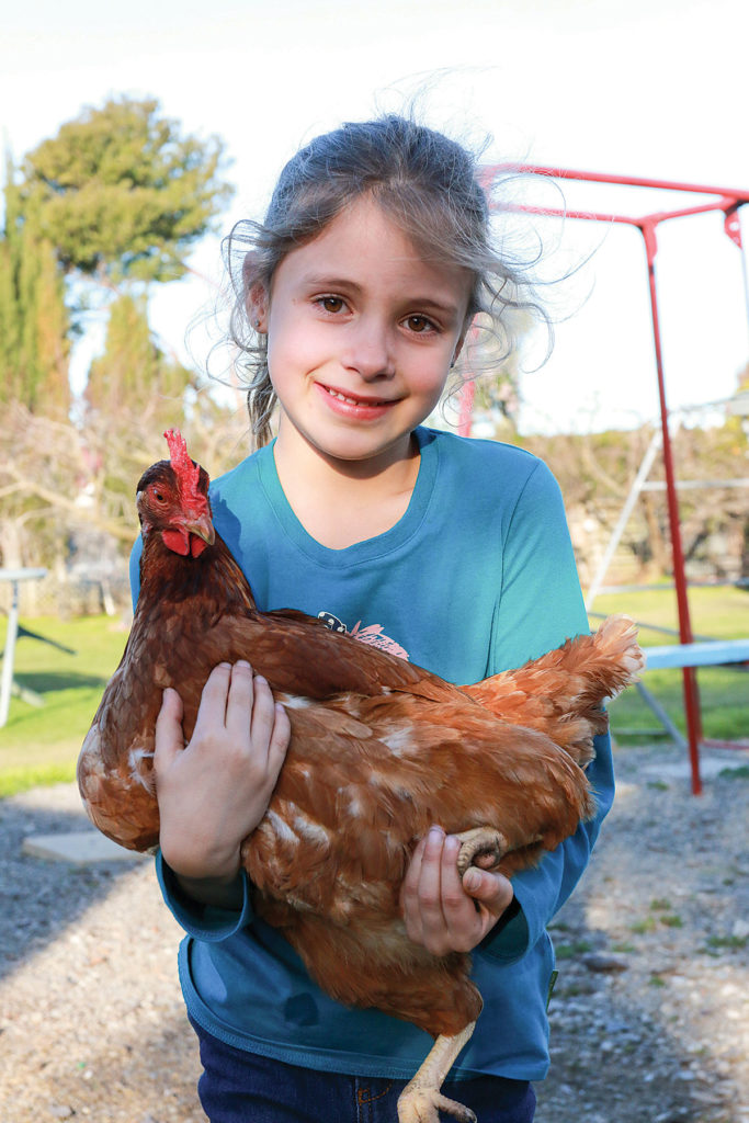 Greta Foote, 6, holds one of her feathered friends which she helped raise from a chick last year. Photo: Paula Hulburt.