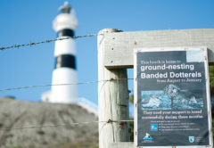 Signs to educate the public are clearly seen at Cape Campbell peninsula. Photo: Matt Brown.