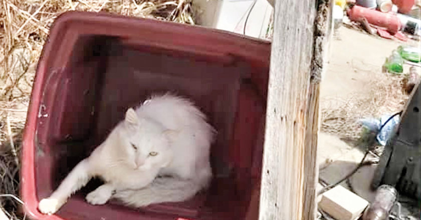 Cats on a Blenheim property have been suffering say animal advocates. Photo: Supplied.