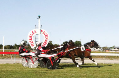 Stars Tonight, 8, driven by John Dunn, gets up to win the Marlborough Cup prelude by a neck on Friday. Photo: Matt Brown.