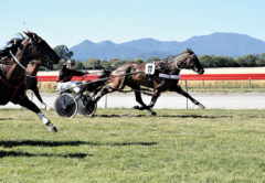 Clasina Maria takes out the 2019 Marlborough Cup at Waterlea, the 99th running of the province's premier harness racing prize. Photo: Peter Jones.
