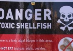 Higher than safe levels of toxins in shellfish have been found in Croisilles Harbour. Photo: Supplied.
