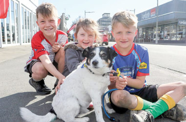 Dogs may become a common sight in Blenheim's town centre. Brodie, Maisie and Hadley MacDonald with Kip. Photo: Matt Brown.